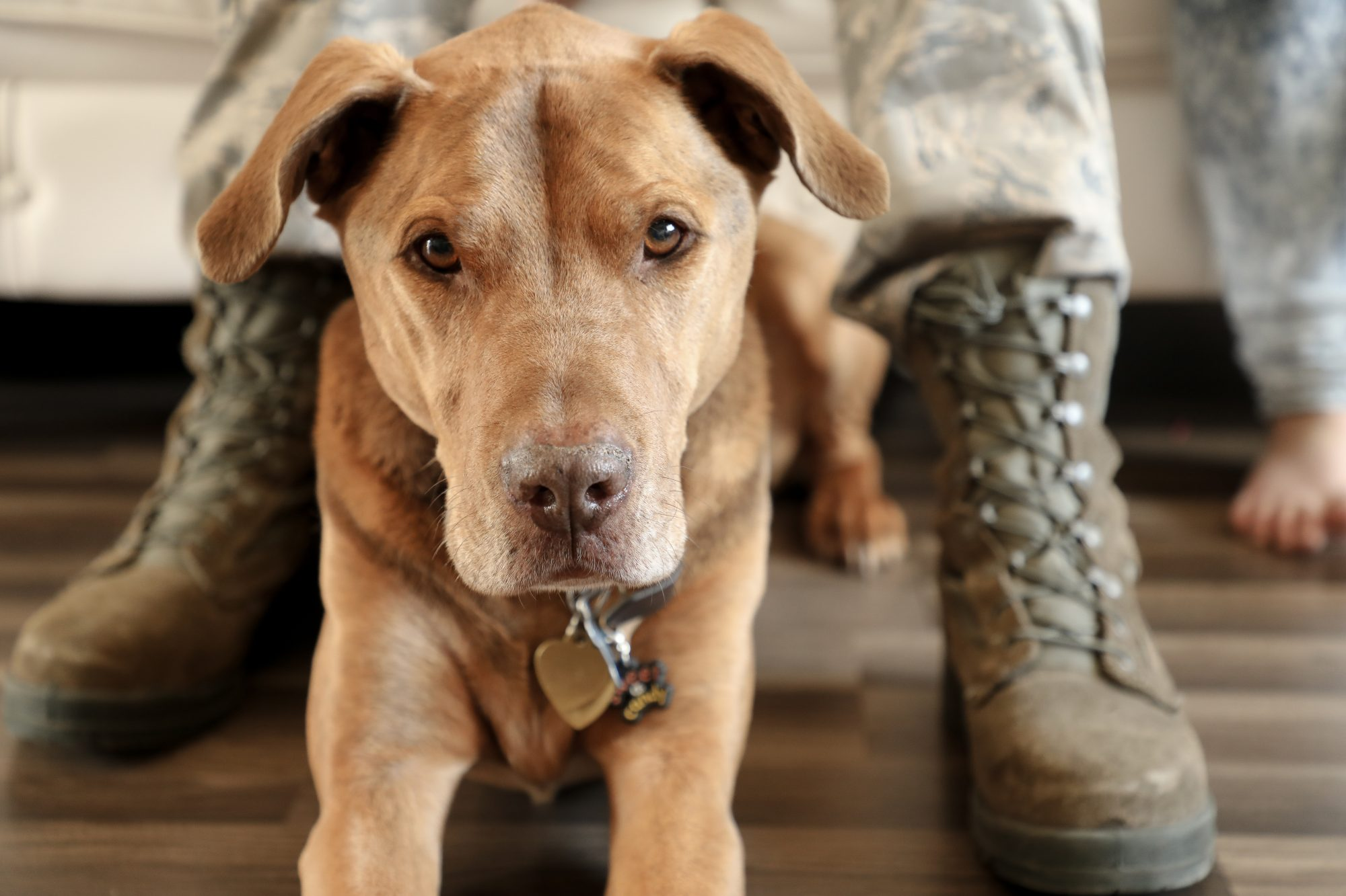 How You Can Help the Pets of Deployed Military Service Members