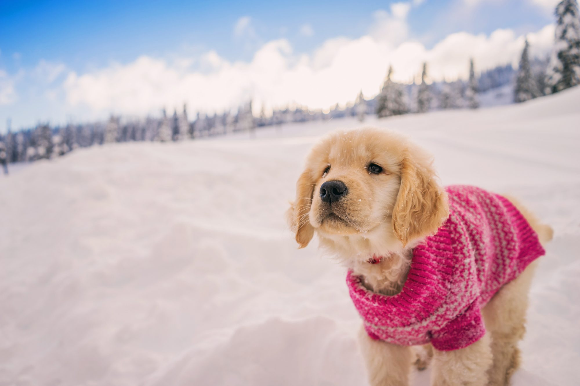 15 Cozy Ideas to Keep Your Dogs Warm This Winter