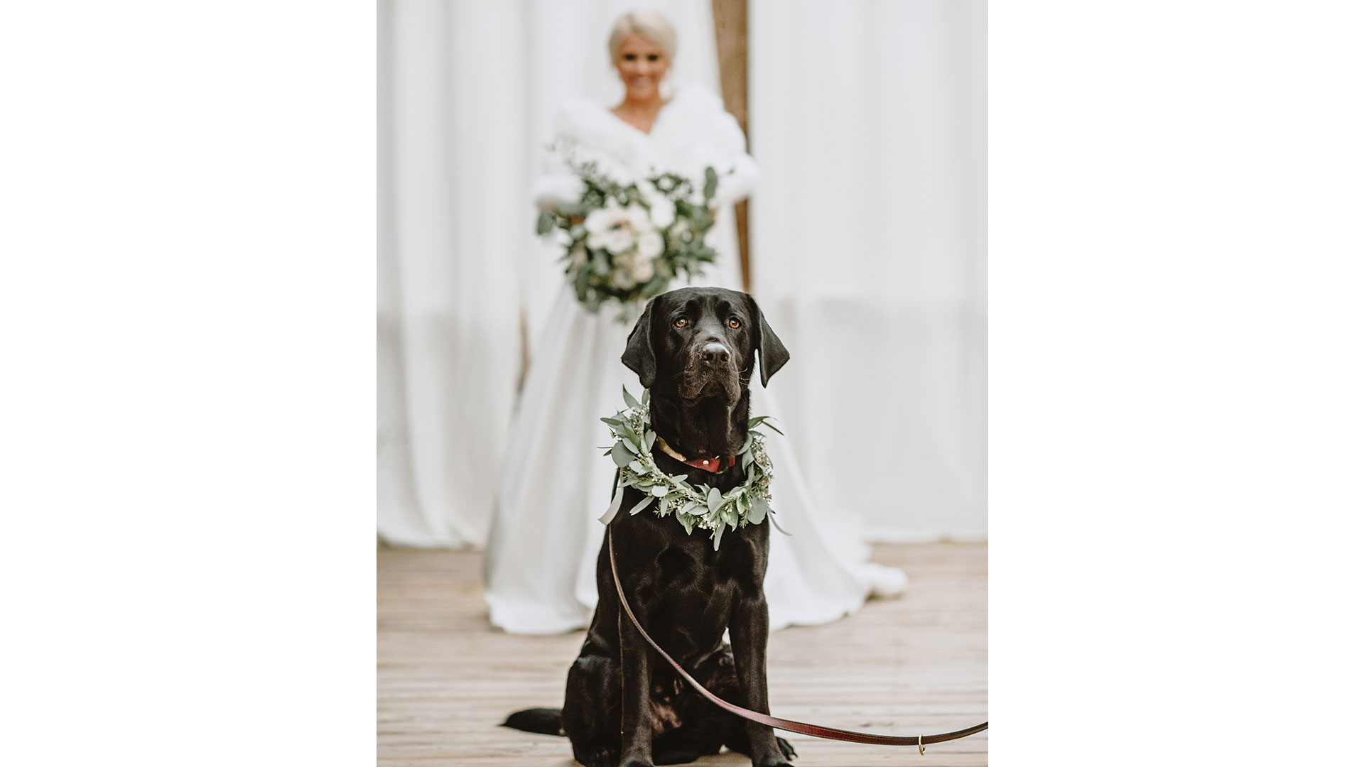 Bride Dog First Look