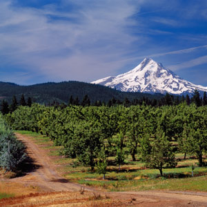 Mount Hood Wildflower Walks
