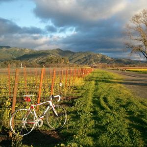 Biking Calistoga's Wineries