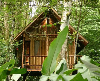 World's Best Treehouse Hotels