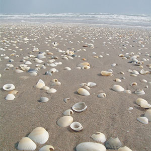 Shelling in Port Aransas, Texas
