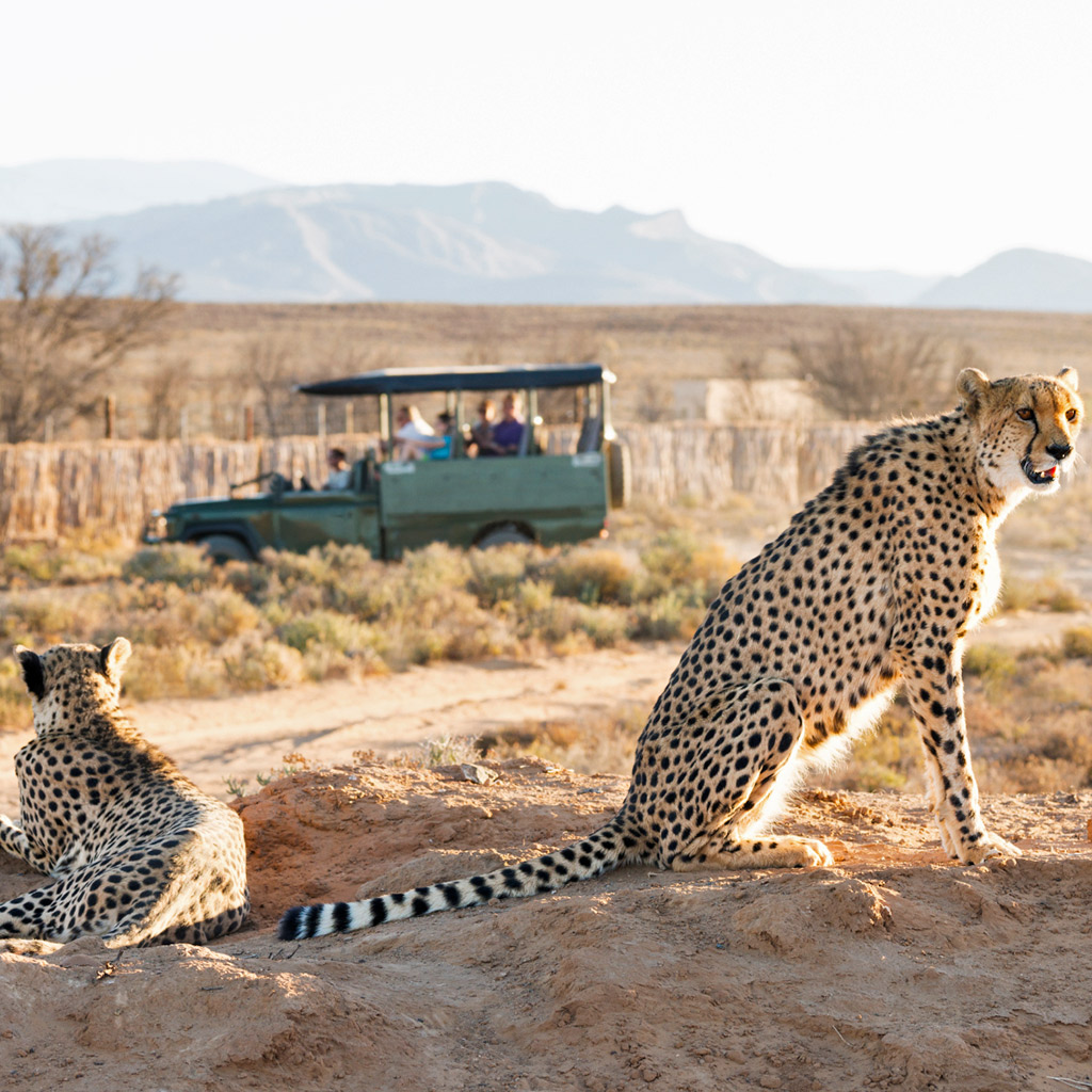 Where to Go on Safari Near Cape Town
