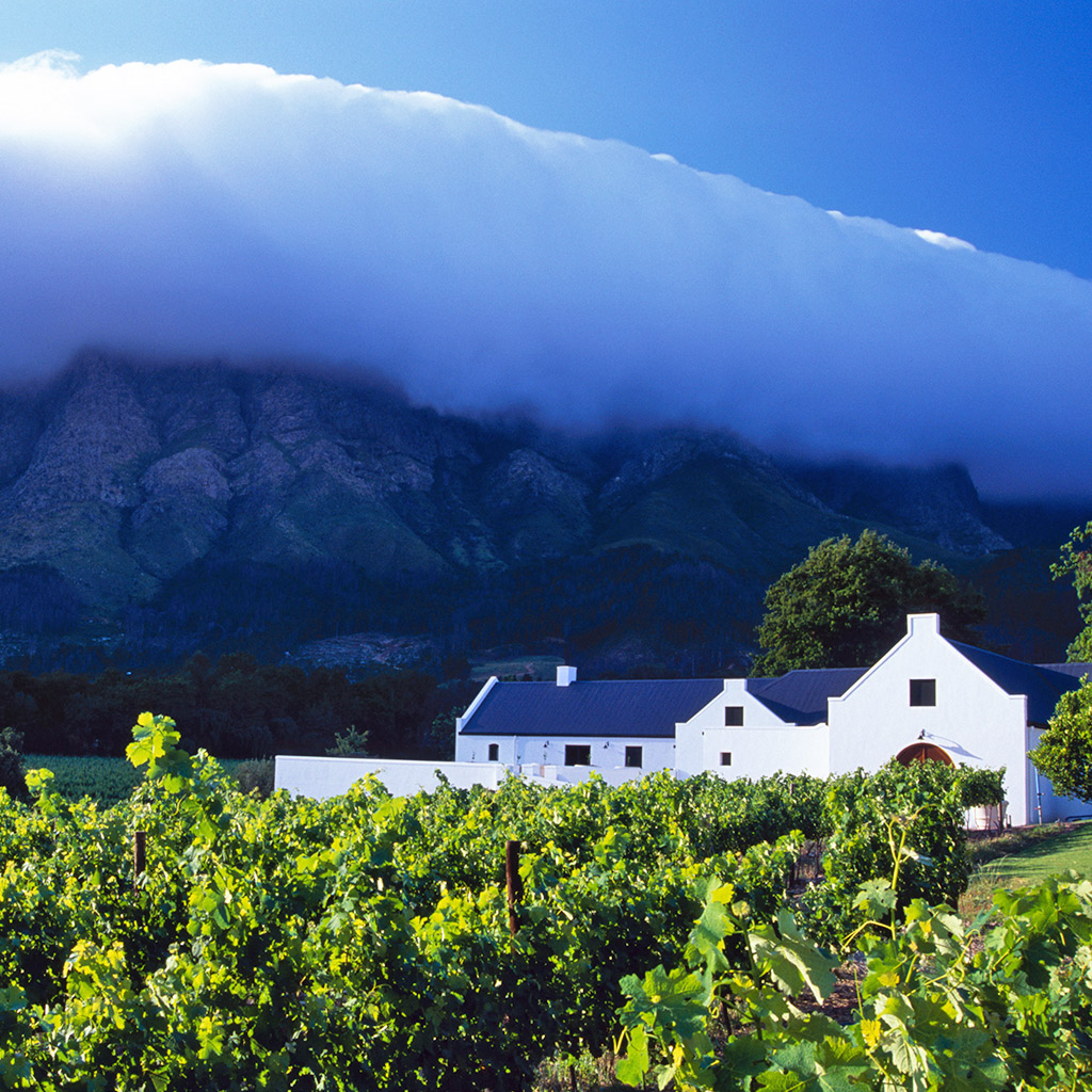 Best Vineyards in Cape Town's Winelands