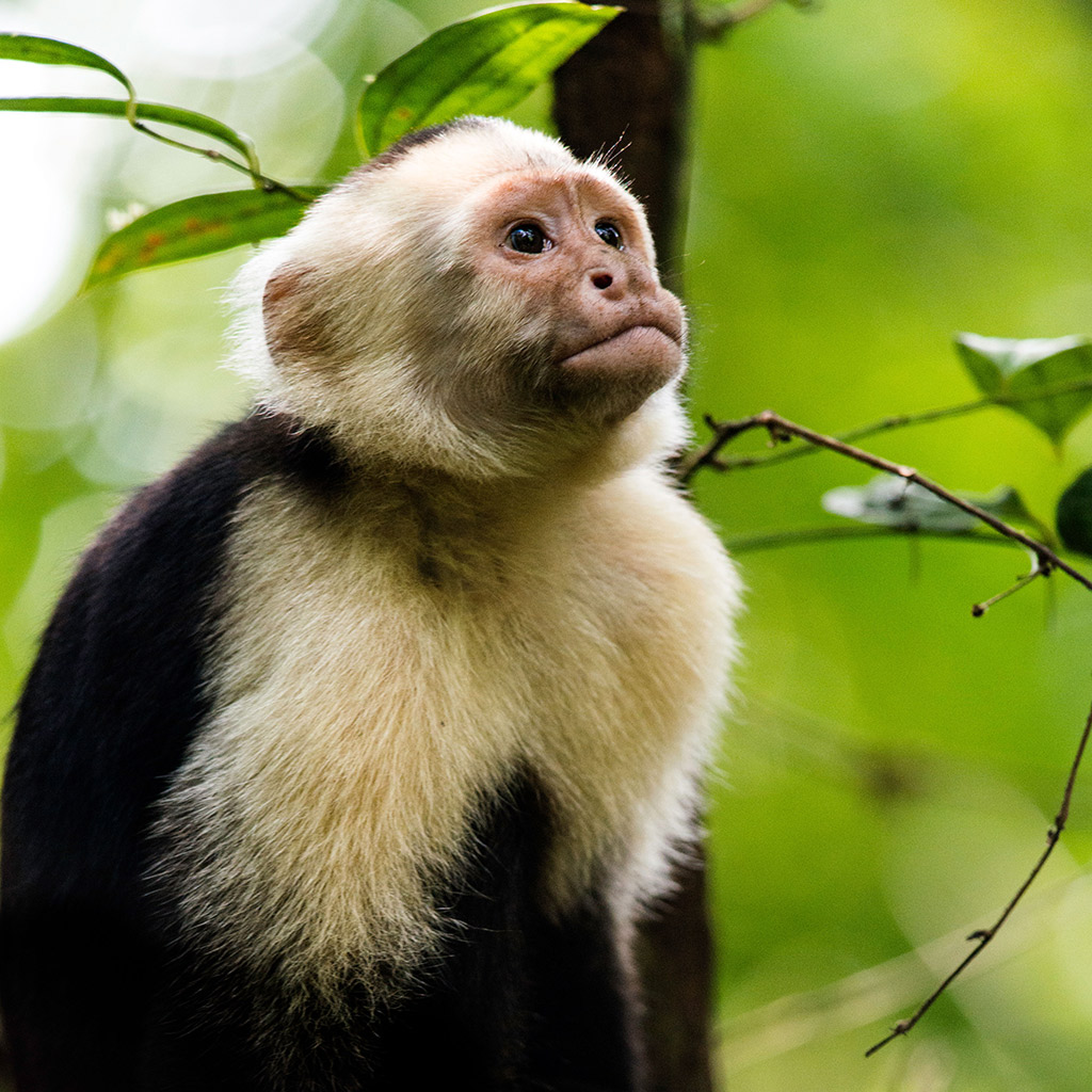 Best Family-Friendly Eco-Tours in Costa Rica