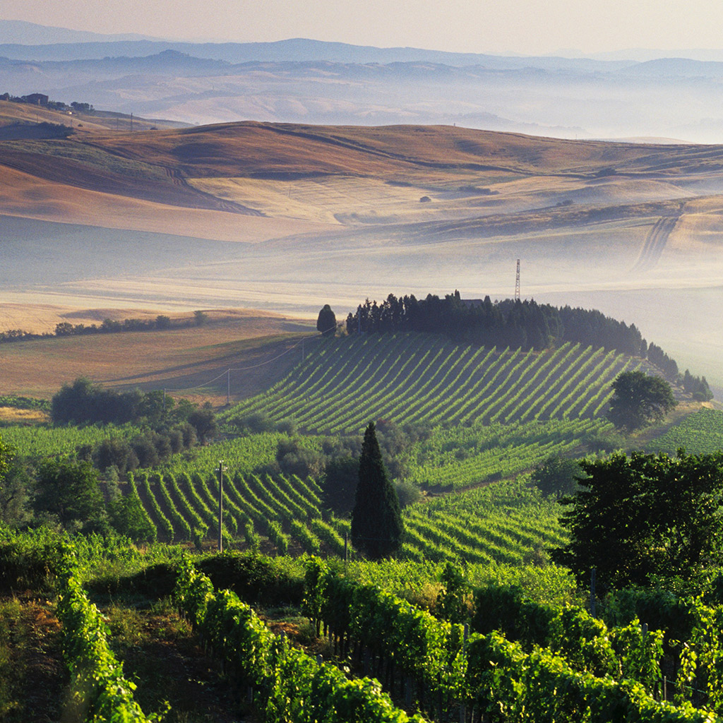 Tuscany's Best Wine Regions