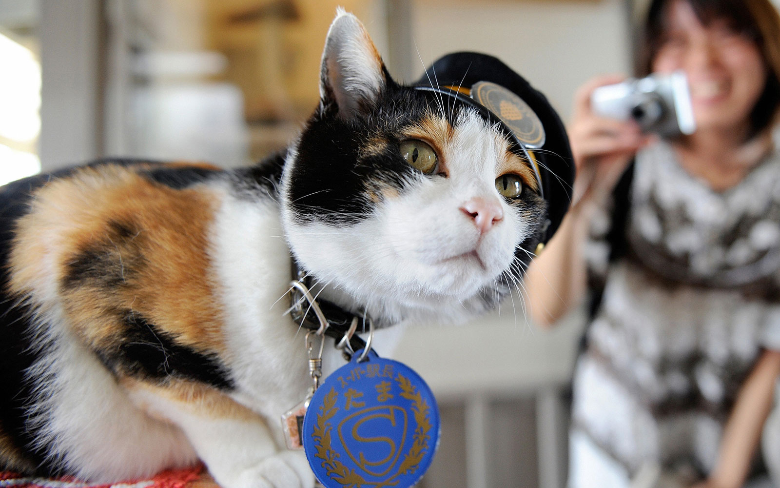 Remembering Tama the Cat Stationmaster
