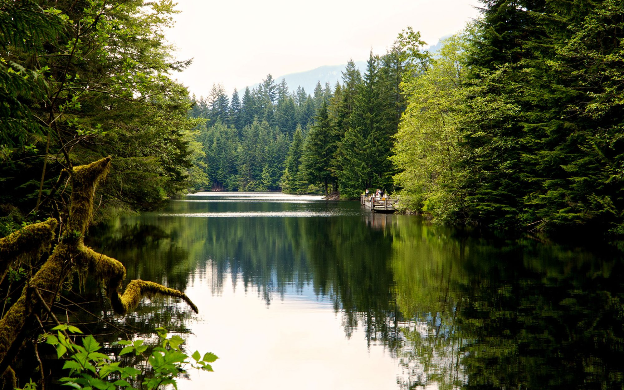 Every X-Files Forest Scene Was Shot in the Same Vancouver Park