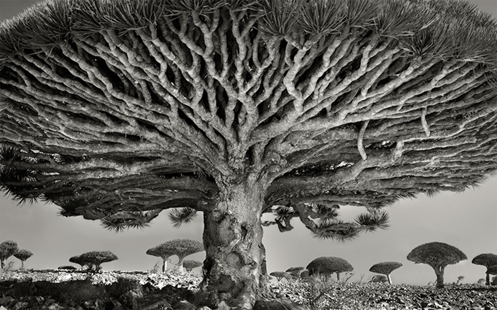 Photos Series of World's Rarest Trees