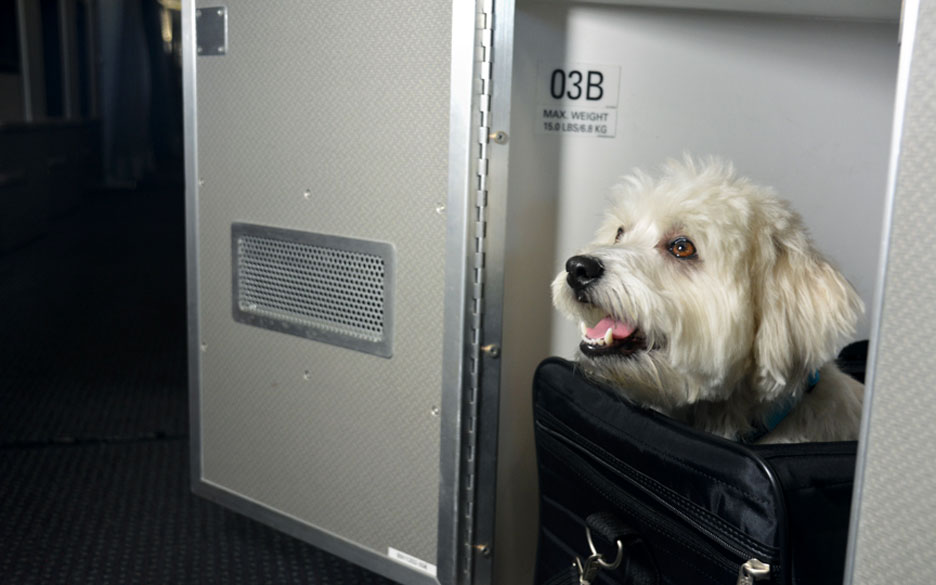 American Airlines First Class Cabins for Pets Travel + Leisure