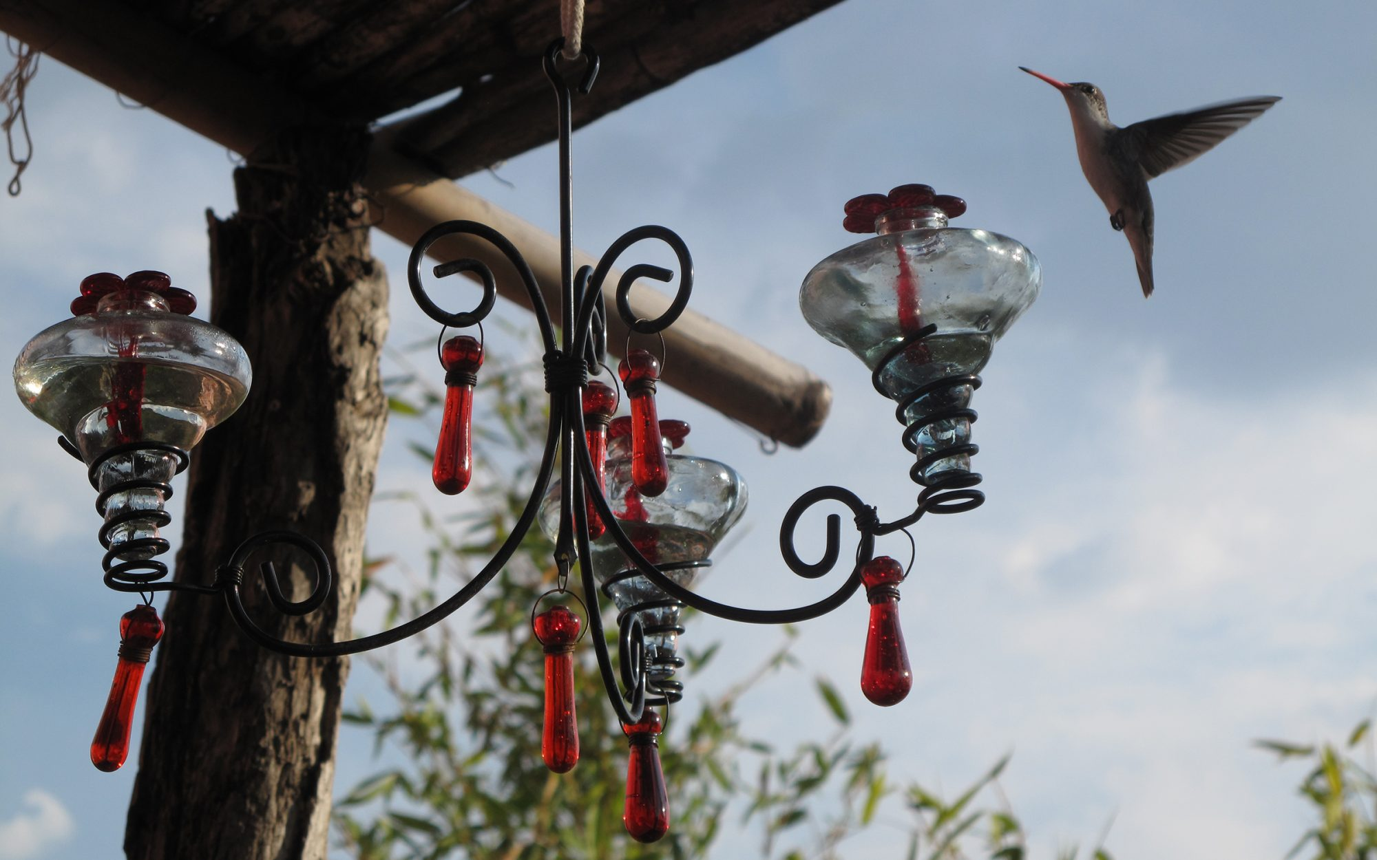 An International Hummingbird Festival in Mexico
