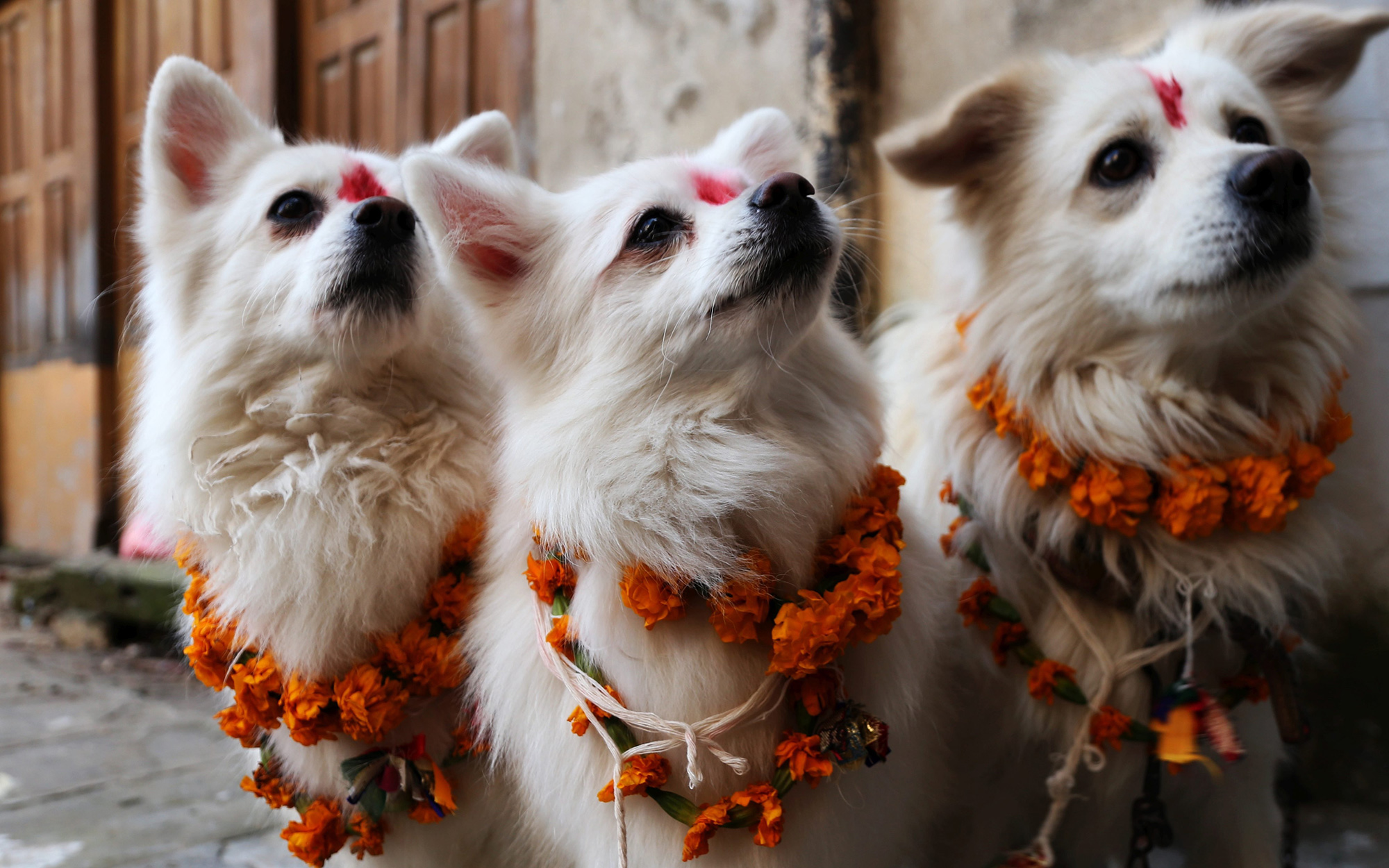 Nepal Celebrates Dogs During Annual Tihar Celebration