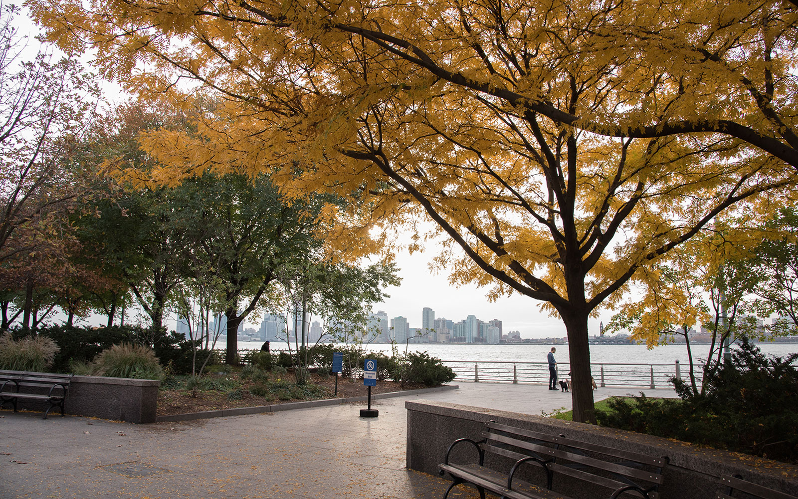 A Dog Walker's Guide to New York City's West Village