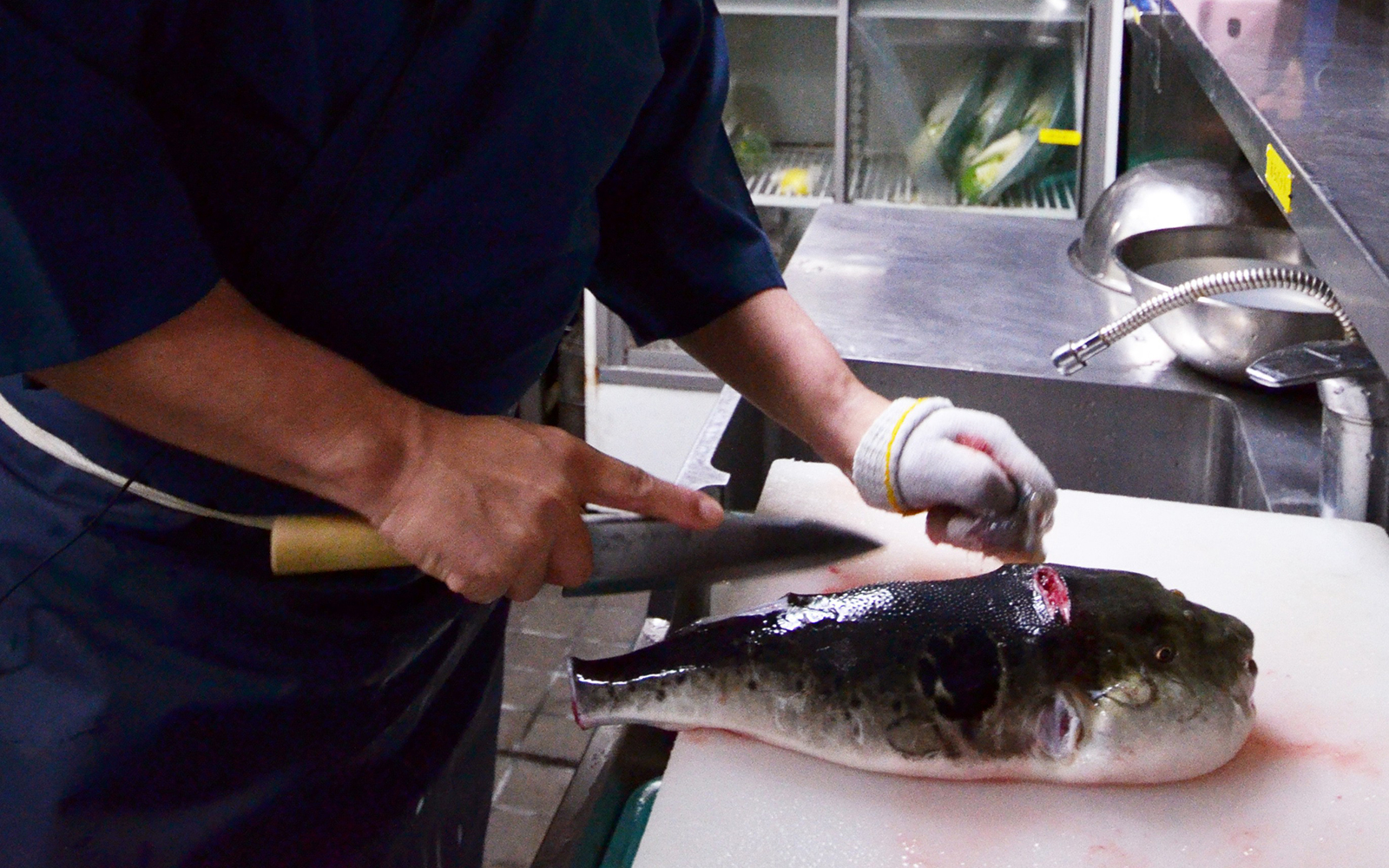 Blowfish in Japan restaurant kitchen