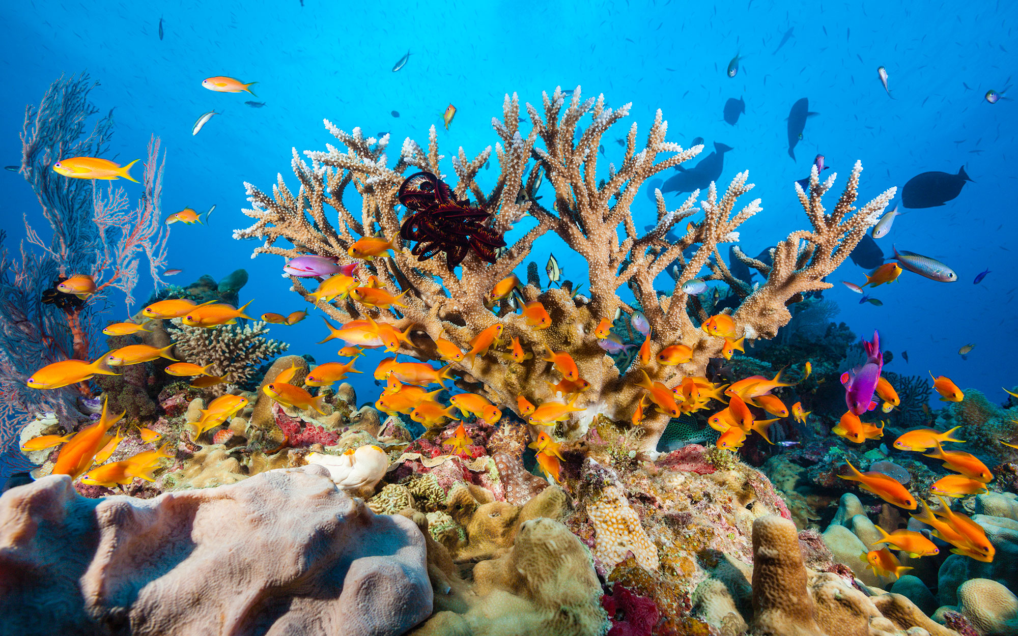 Great Barrier Reef Faces 'Severe' Coral Bleaching, Photos Show
