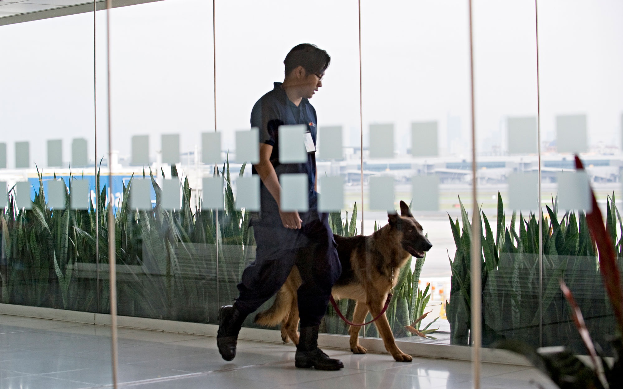 Reddit Spotlight: Everything You Wanted to Know About Airport Runway Patrol Dogs