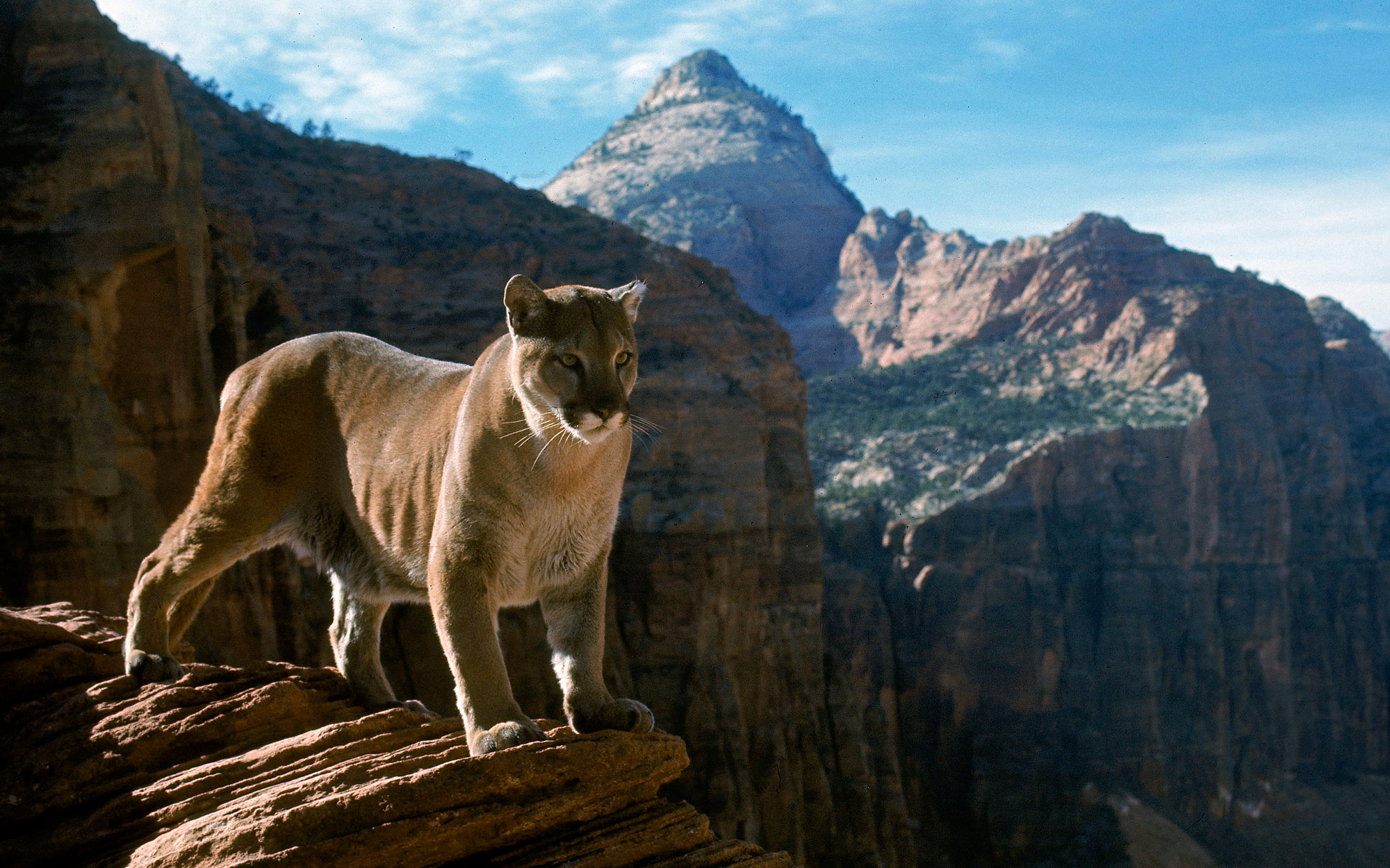 National Parks Photography from LIFE Magazine