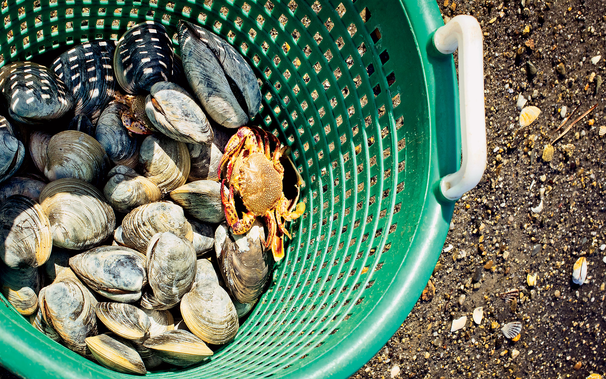 Where to Go Clamming