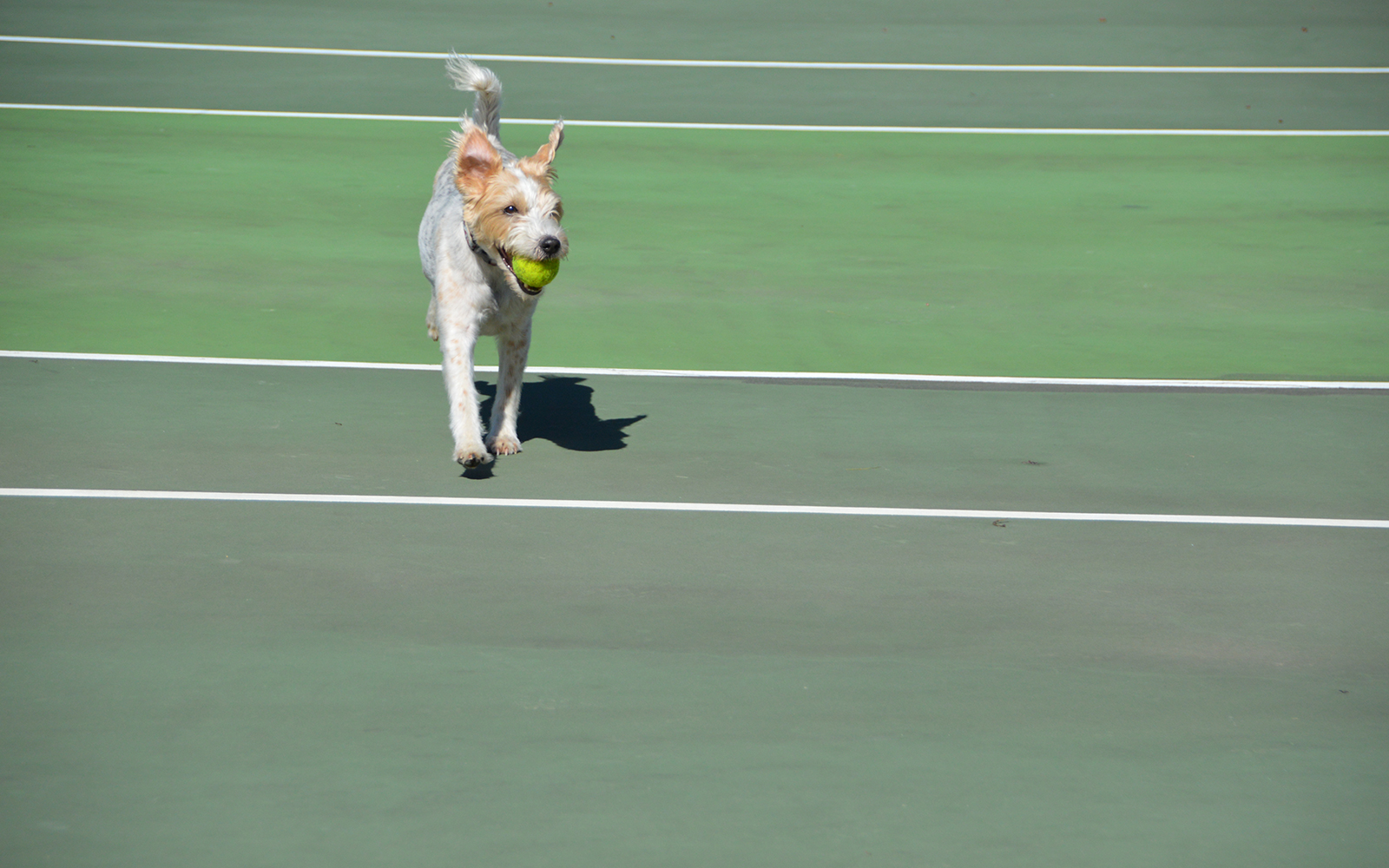 Topnotch Resort Offers Dog-Friendly Tennis Package