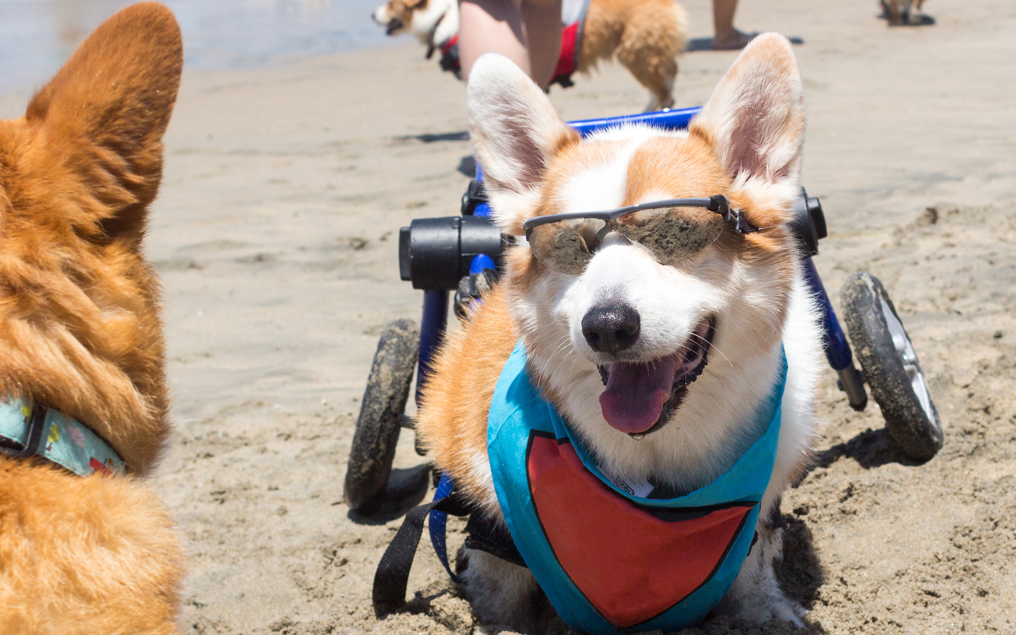 A Corgi Themed Festival is Happening in California This Weekend