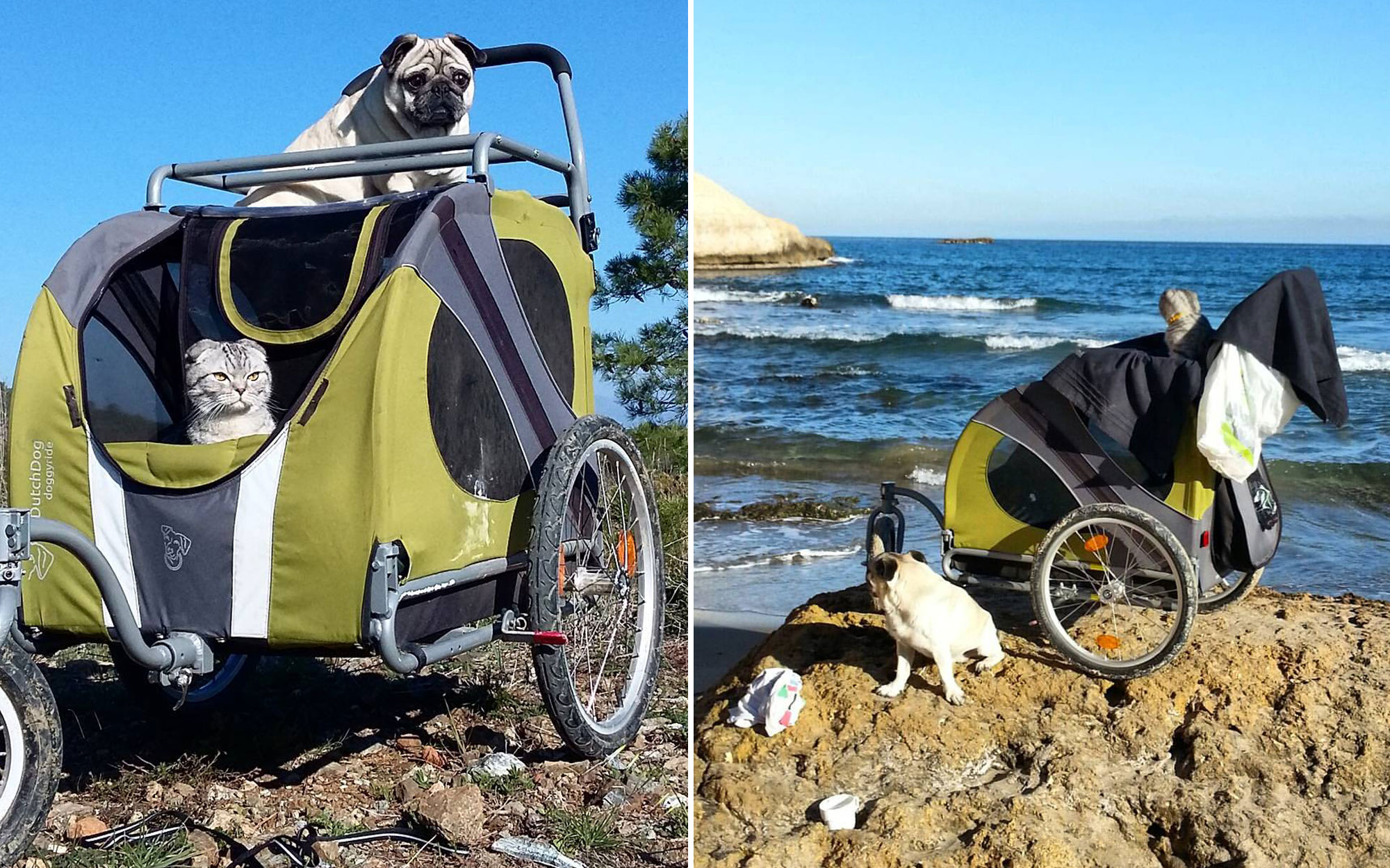 Pug and cat hike the Camino together