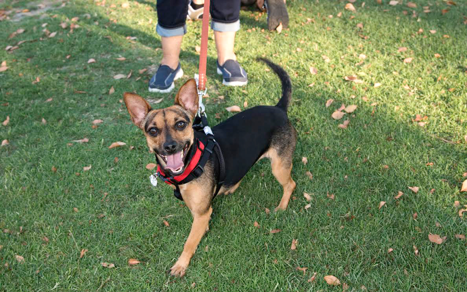 Chiklett is currently up for adoption at the Westin Mission Hills Golf Resort & Spa