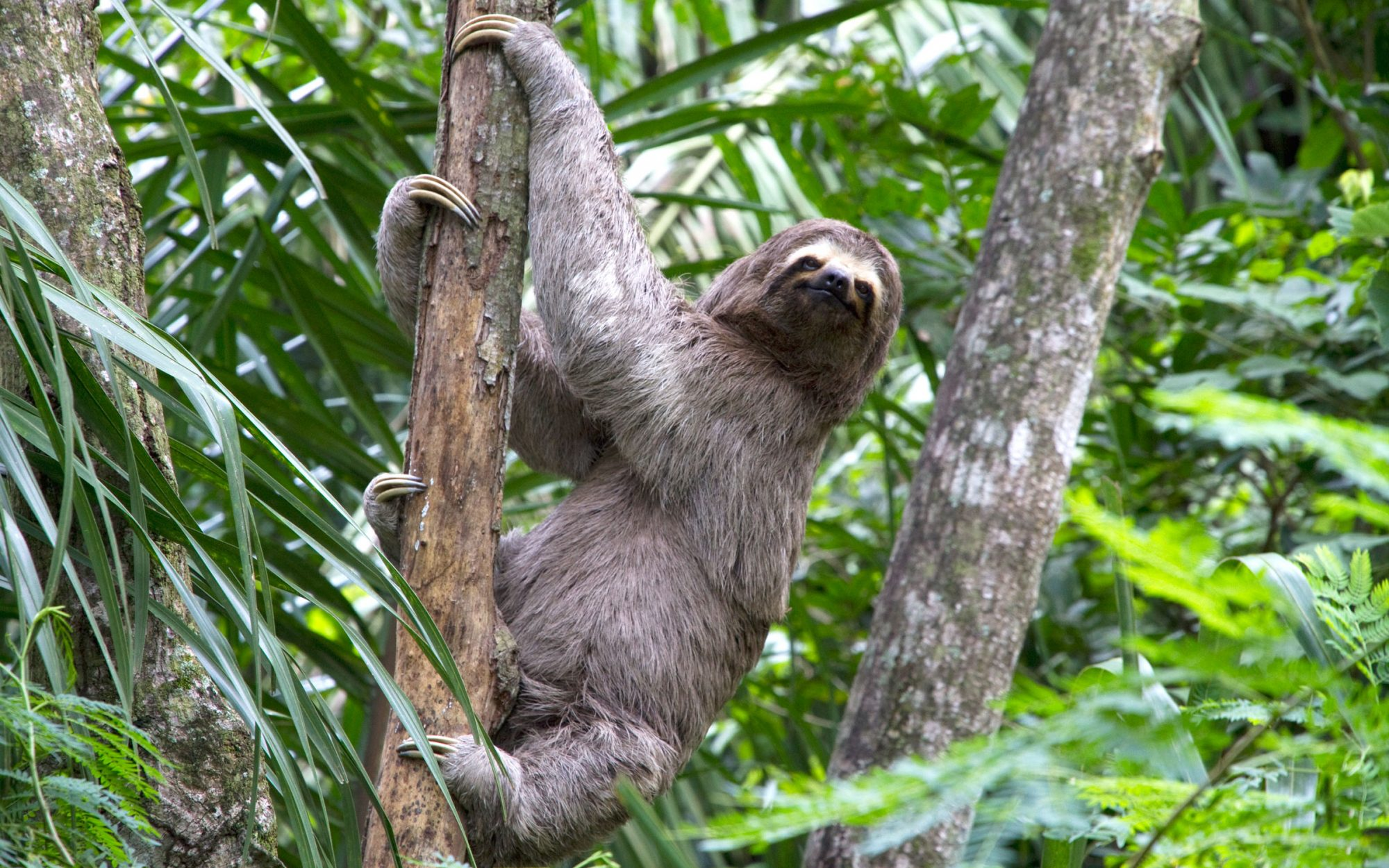 Sloth Attempts Slow-Motion Break-In