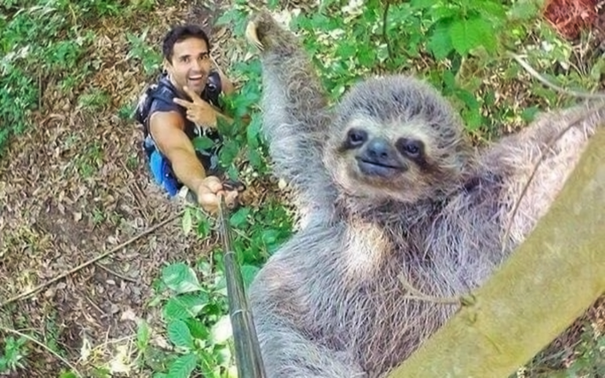 Sloth makes this selfie the greatest ever