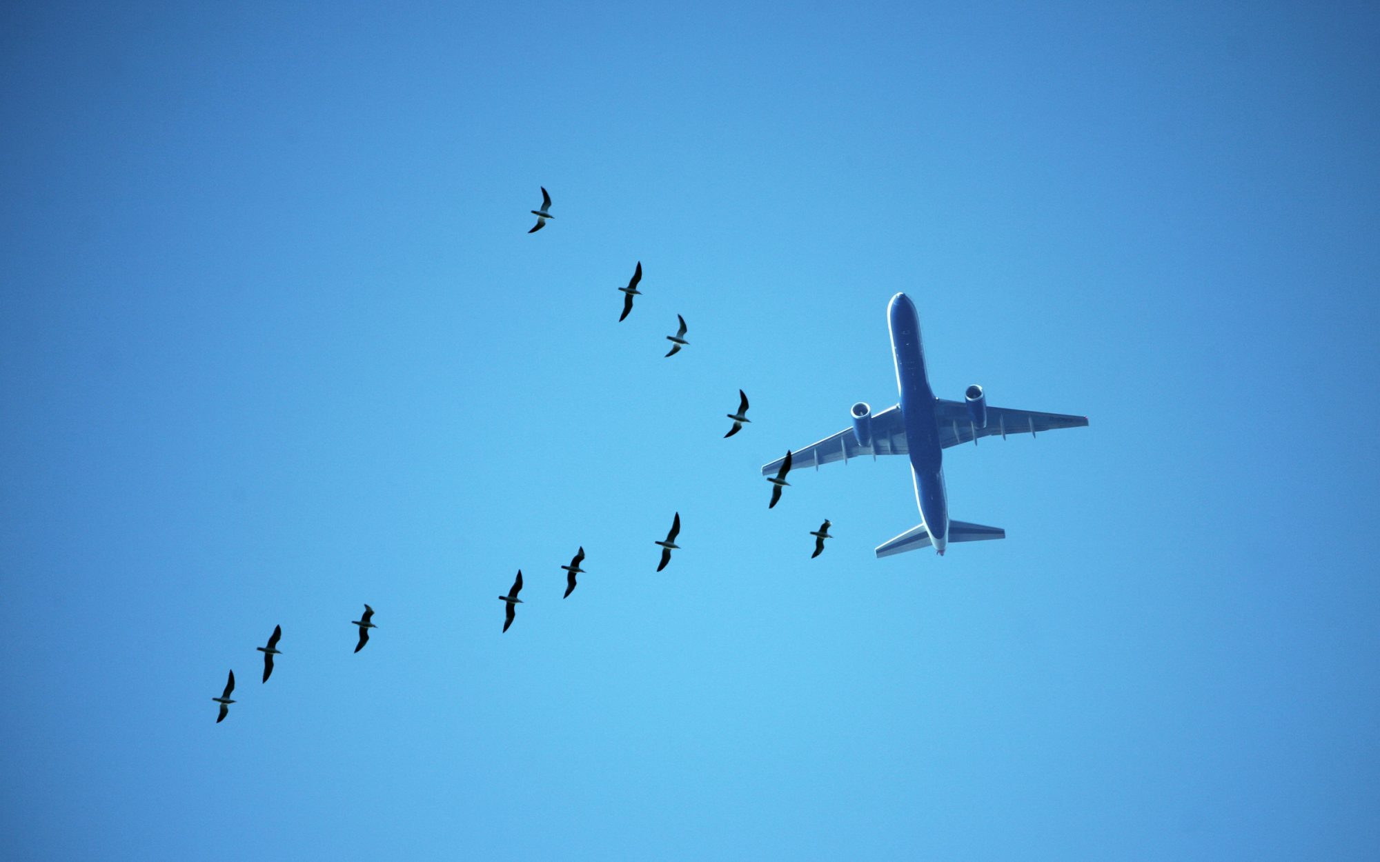 12 Steps To Getting Over Your Fear of Flying | Travel + Leisure