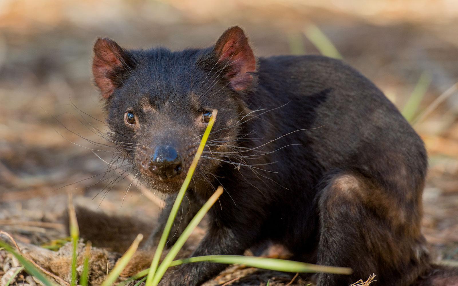 Meet Tasmanian Devils At This Luxury Lodge