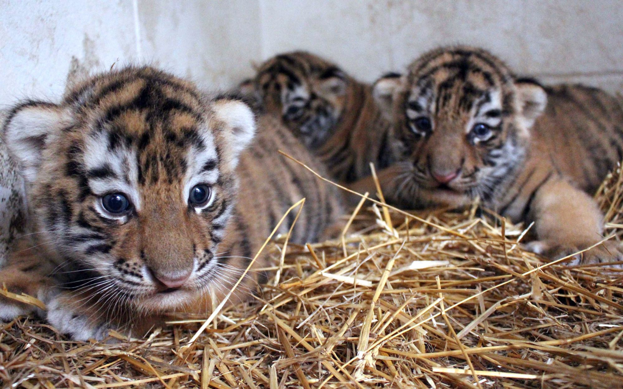 Baby animals at the zoo this week