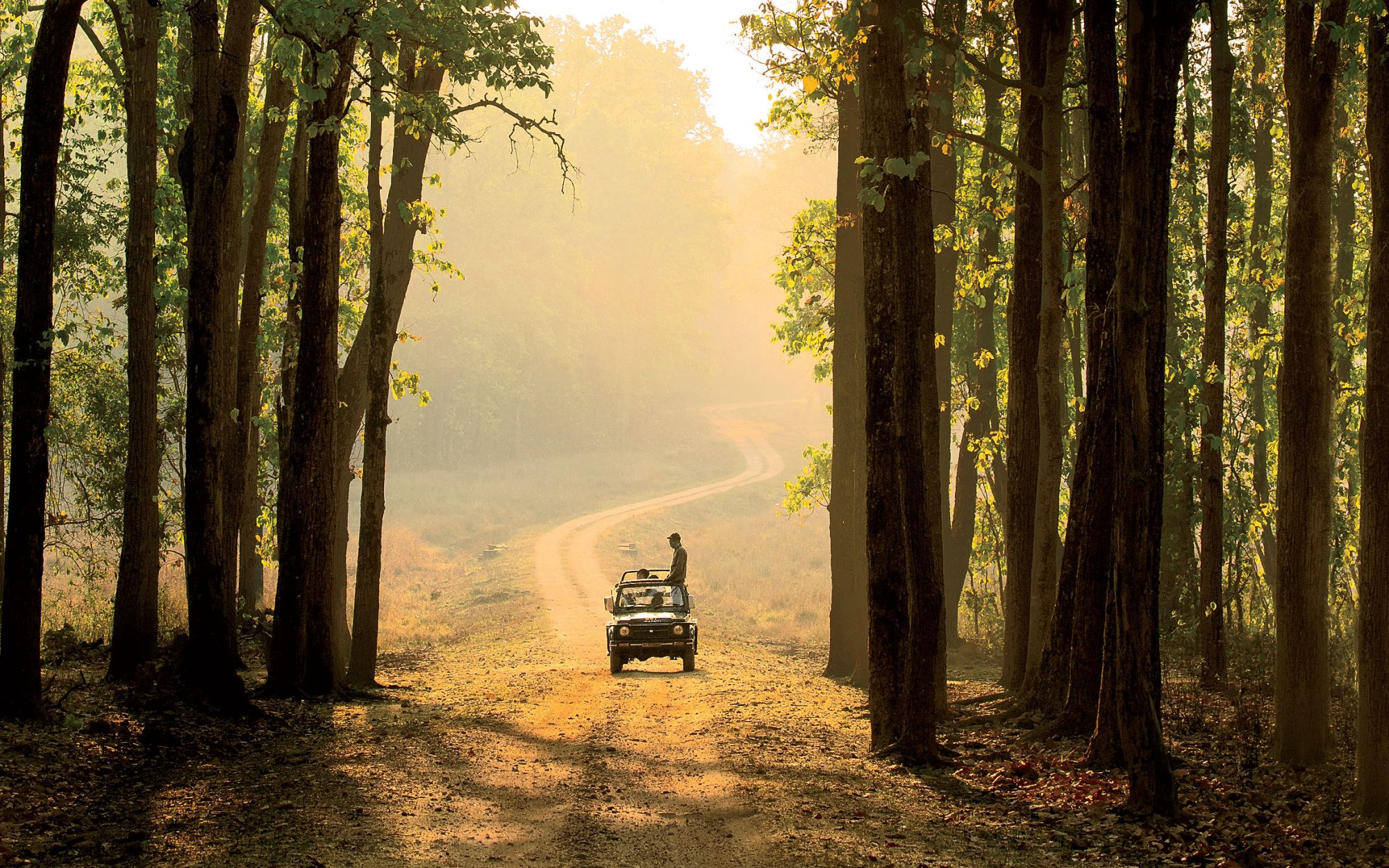 The Tiger Trail: Wildlife Tourism in India