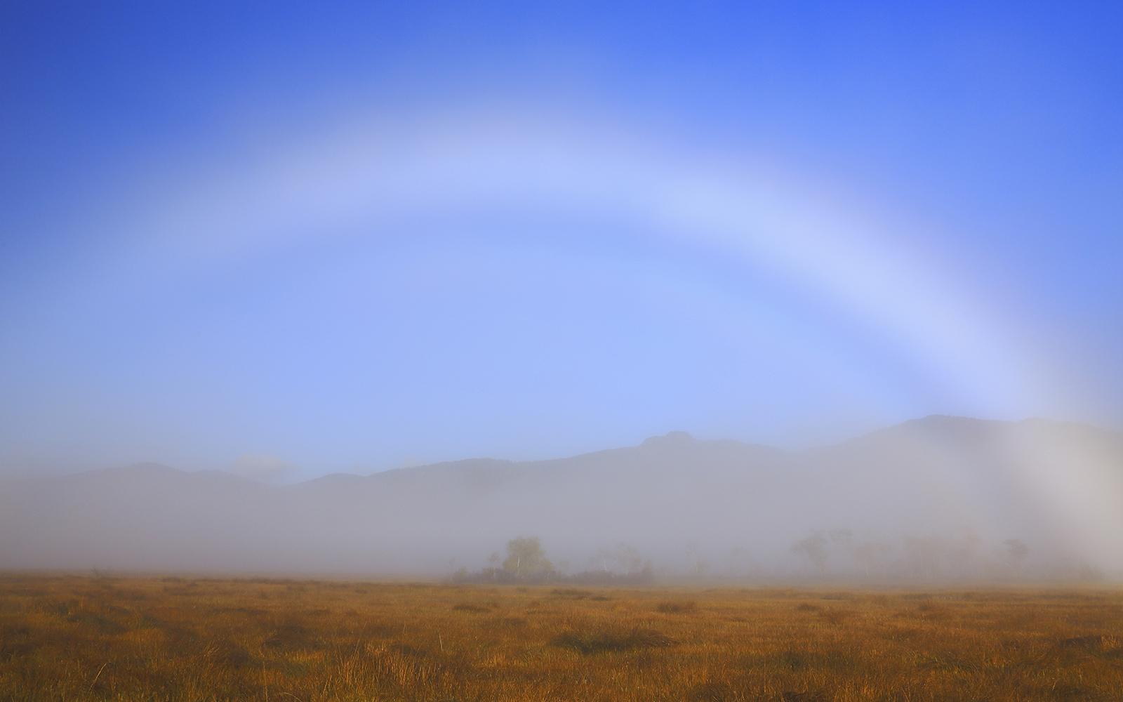 Fog Bow Over Field