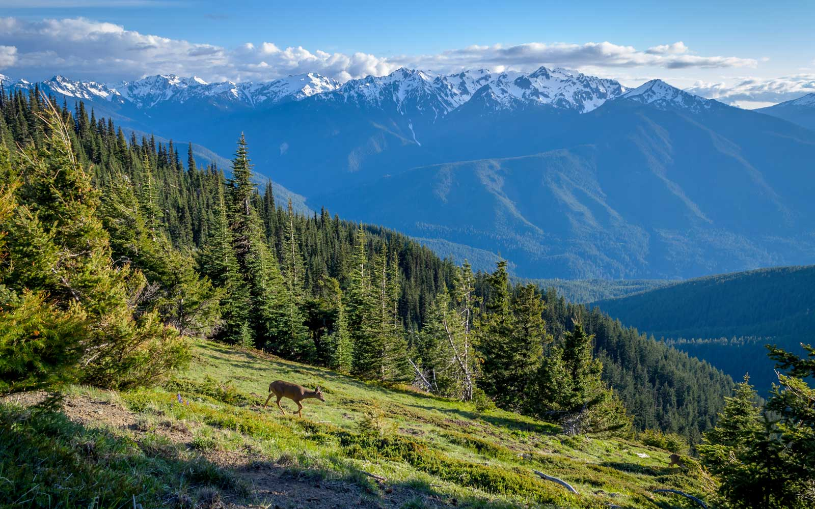 Best Activities and Campgrounds Olympic National Park
