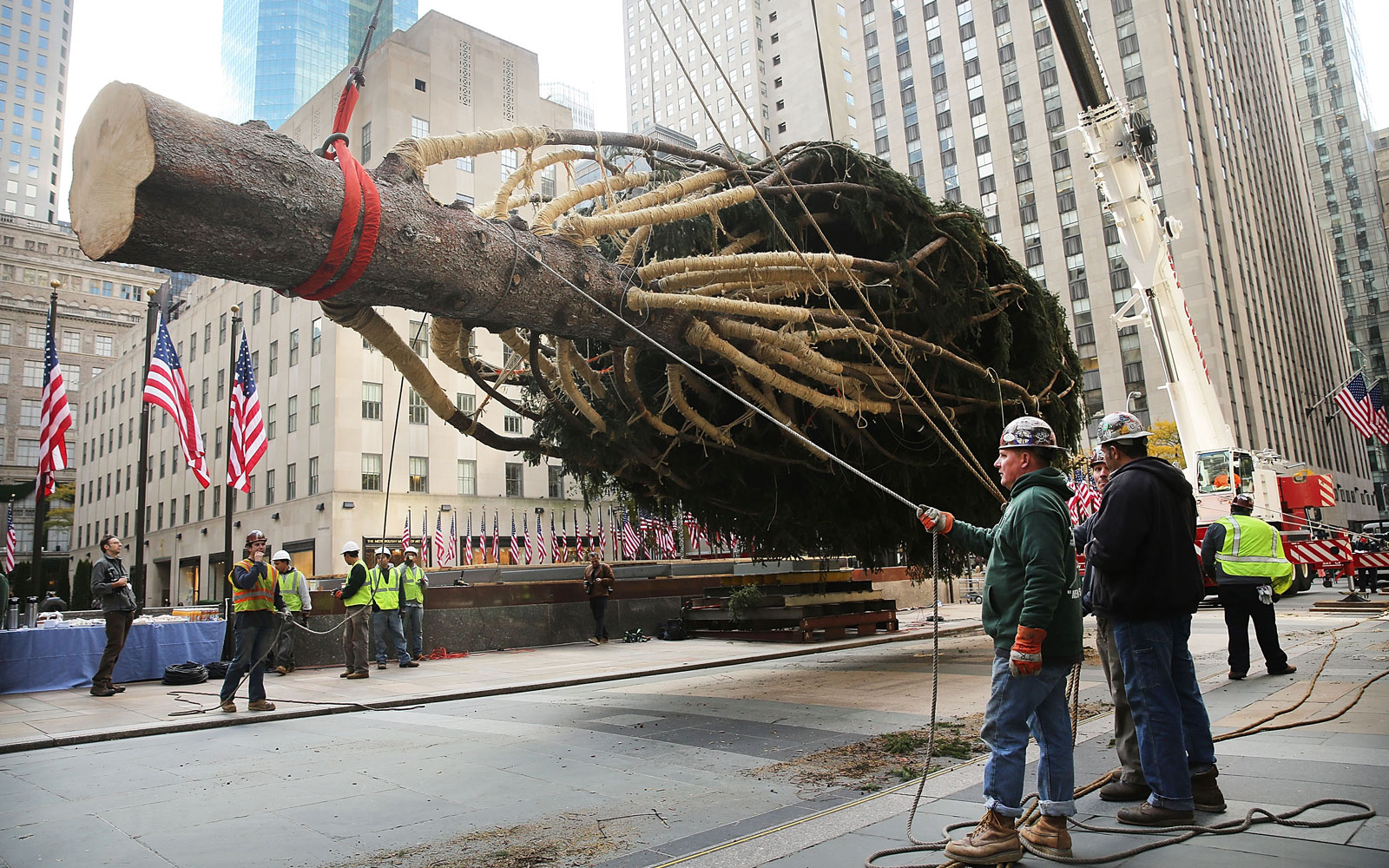 Where the Rockefeller Center Christmas Tree Comes From