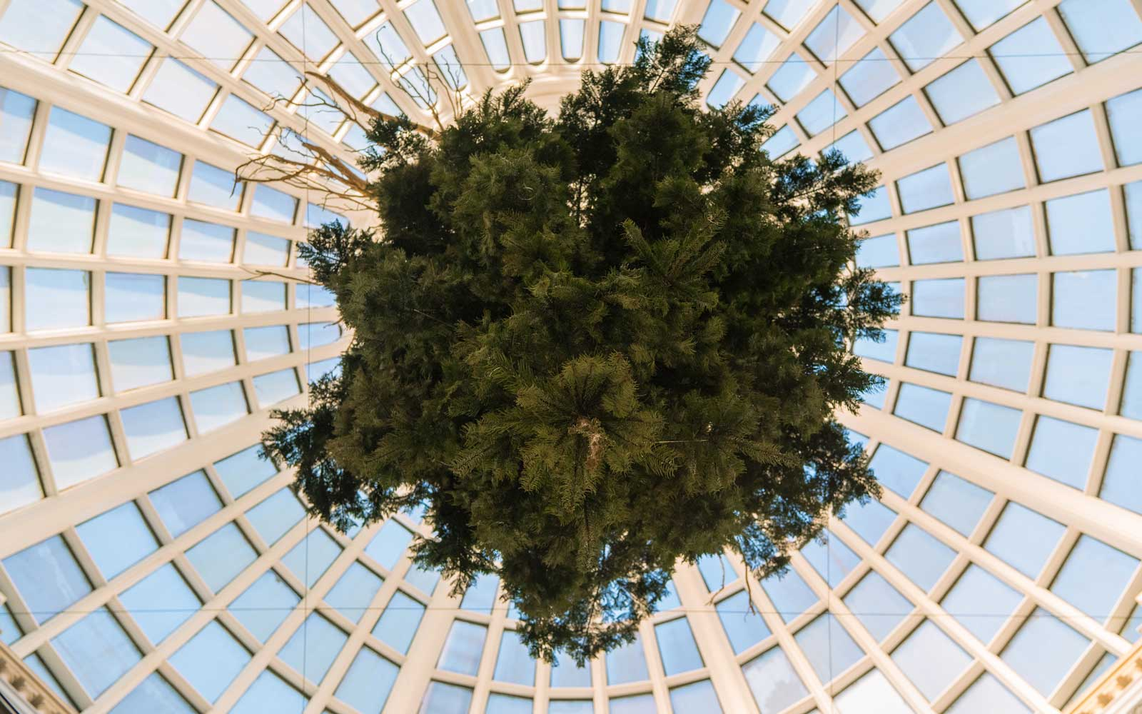 Christmas-Tree-upside-down-TATE1216.jpg