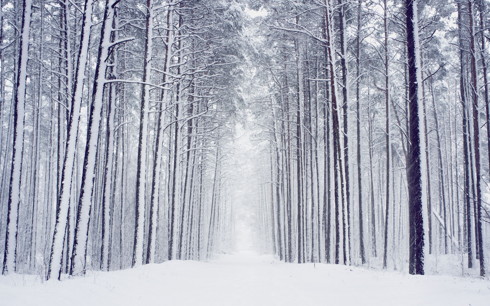 22 Winter Pictures: View Beautiful Images of Winter Scenes
