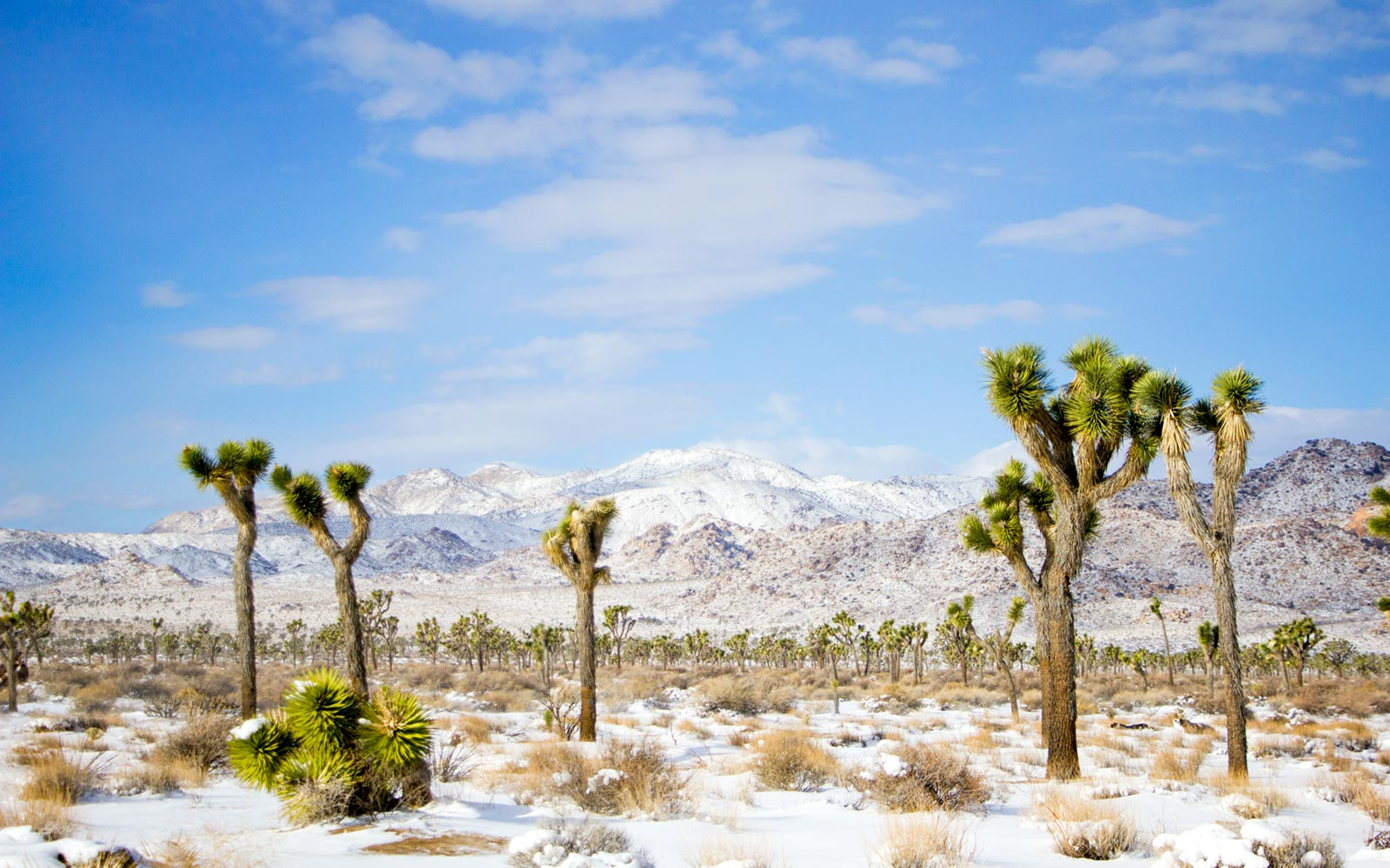 6 Gorgeous Desert Destinations for Soaking Up the Sun This Winter