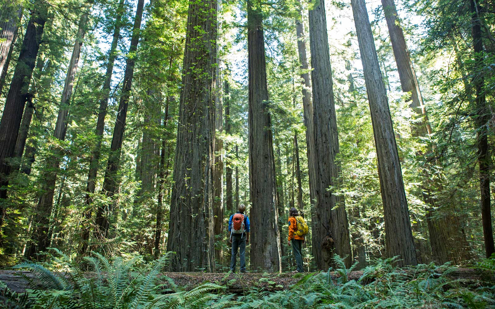 A Guide to Redwood National Park