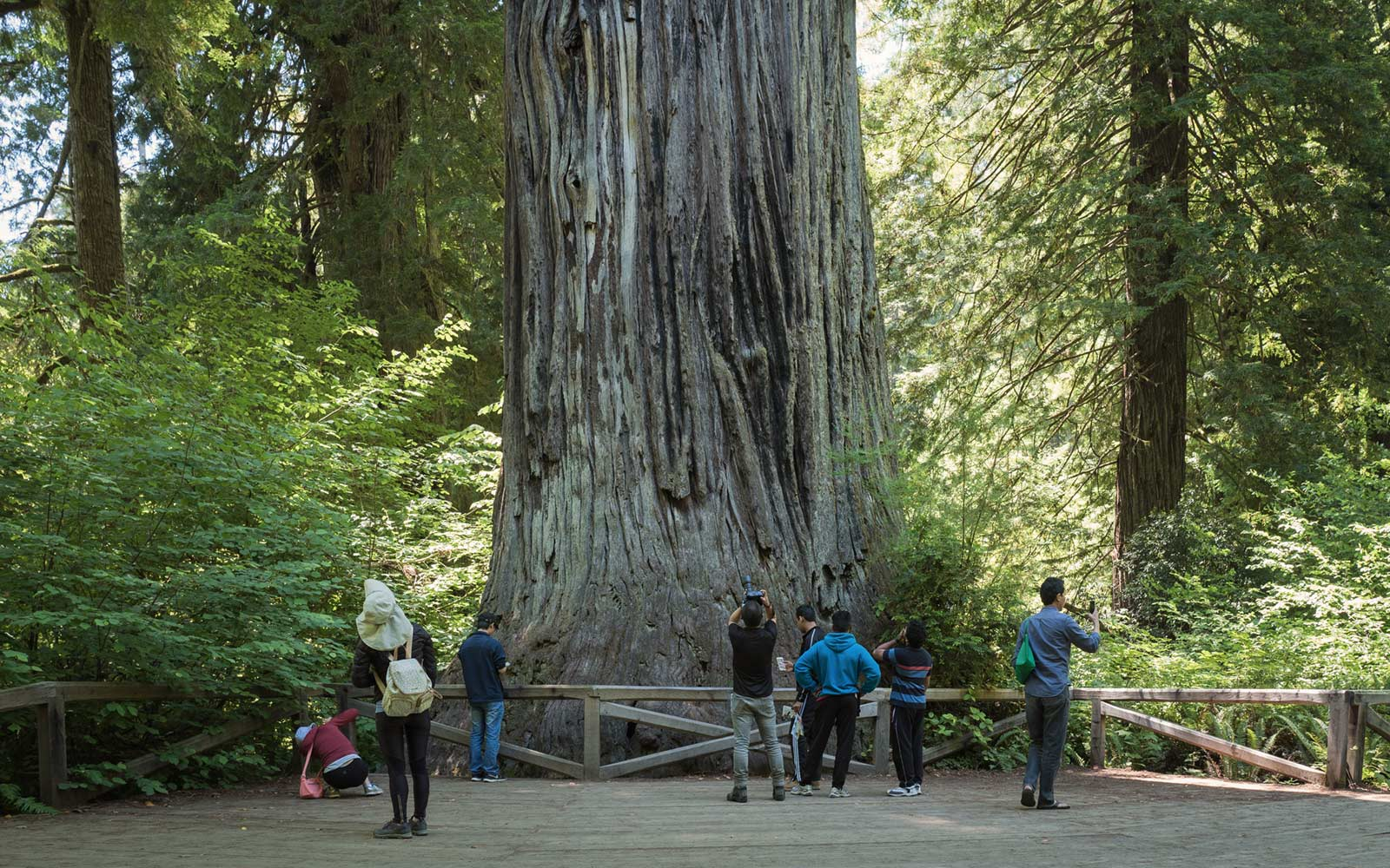 A Guide to Redwood National Park | Travel + Leisure