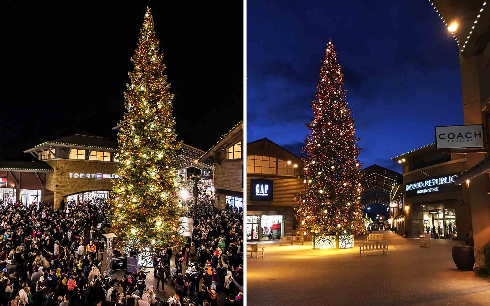 Mountain Christmas Tree.The Best Christmas Trees In The United States Travel Leisure