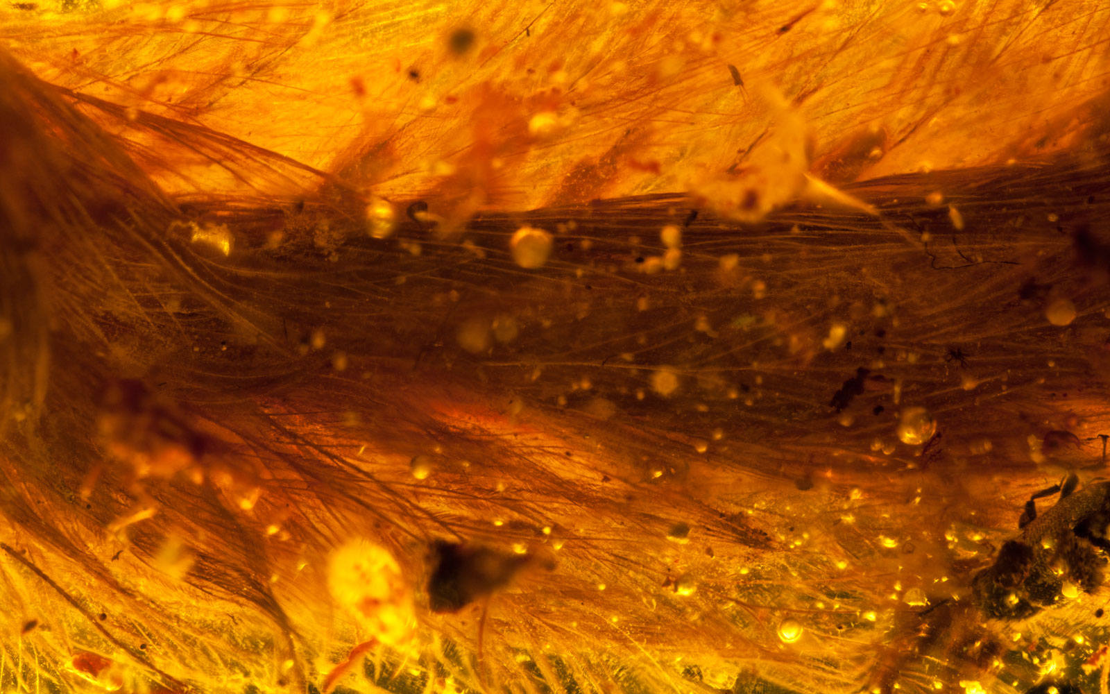 This Dinosaur Tail Was Preserved in Amber for 99 Million Years