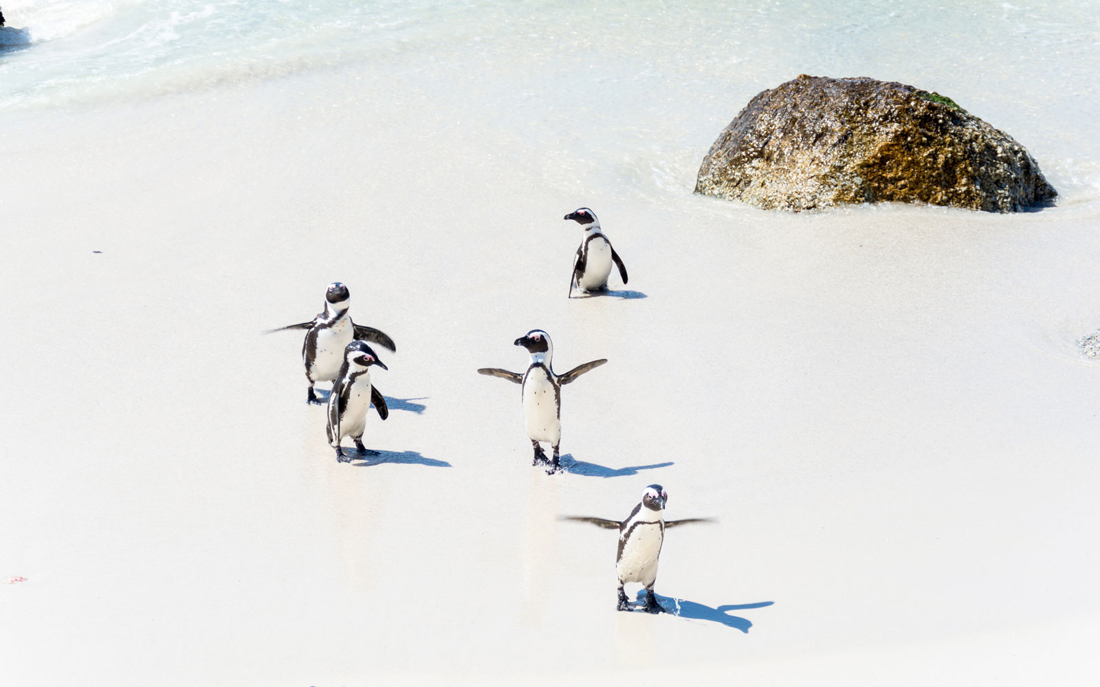 The Best Places to See Penguins, Polar Bears, Narwhals and Other Winter Animals