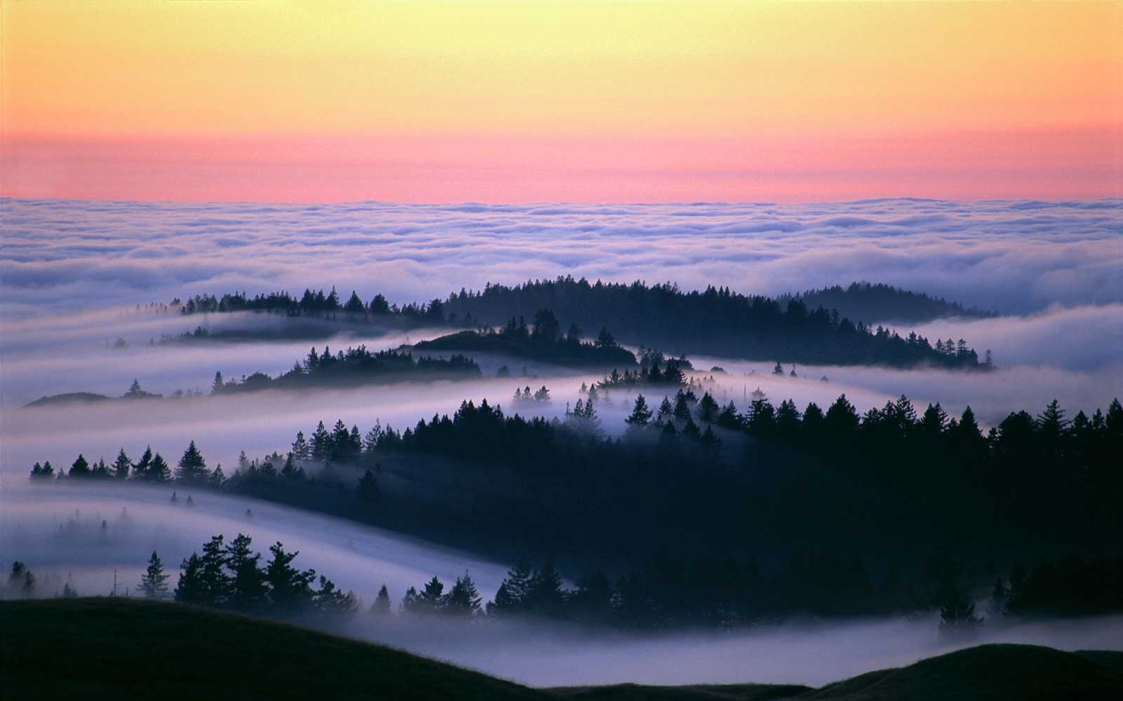 Beautiful Photos of Fog Over California Landscapes