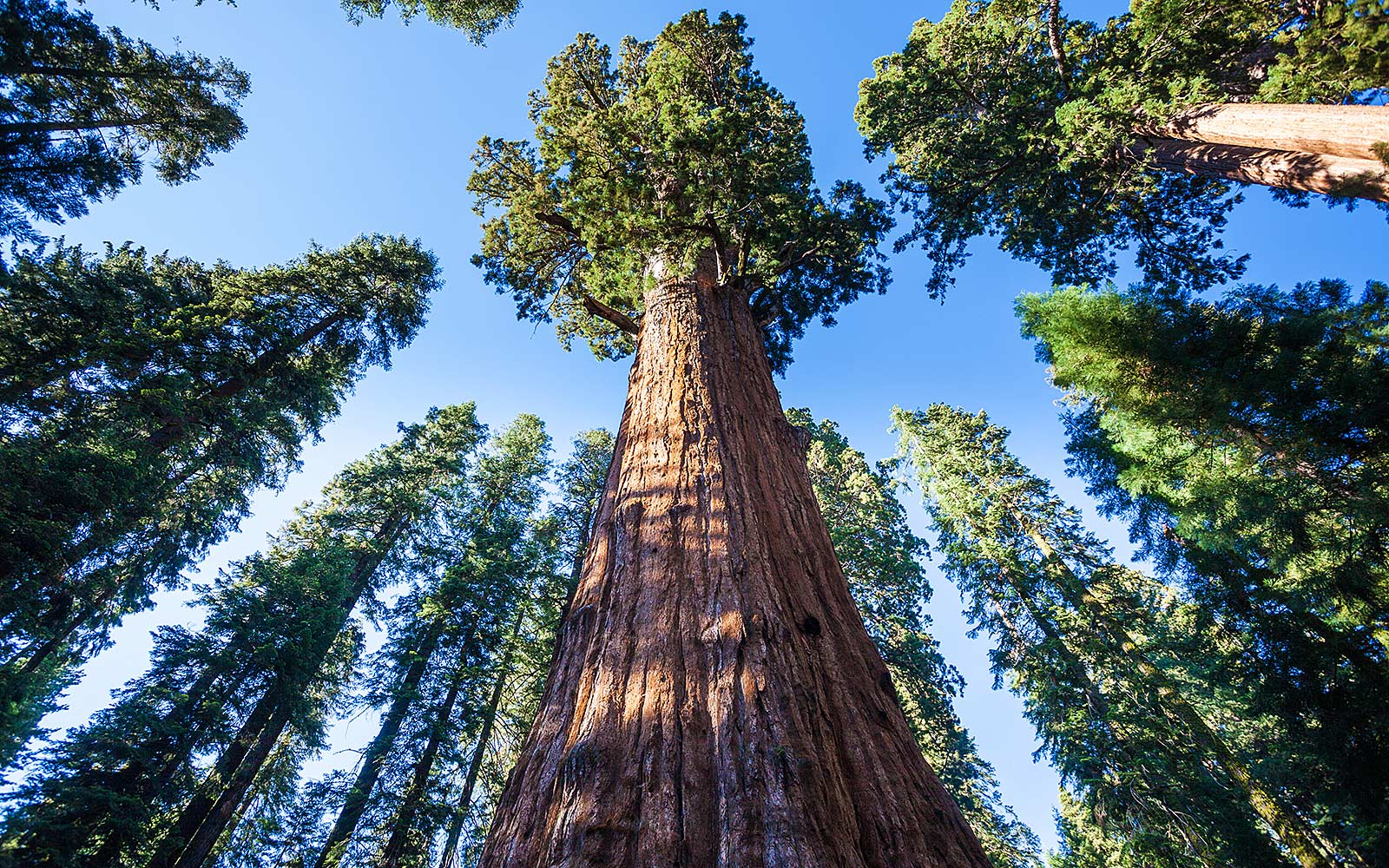 RIP Pioneer Cabin Tree: Here Are 10 More Incredible Trees Worth Visiting