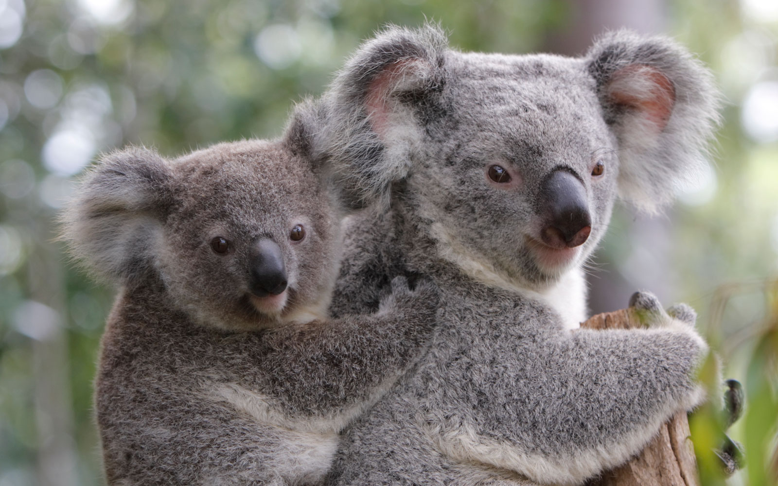 These Adorable Animals Are Helping Australia's Tourism