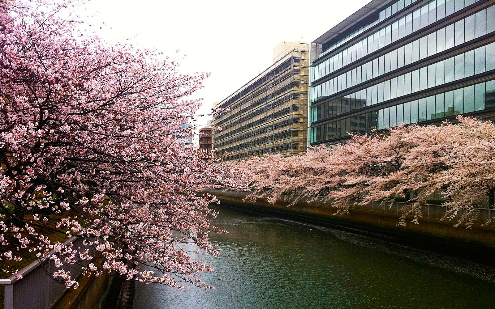 Lesser-known places in Japan to see cherry blossoms