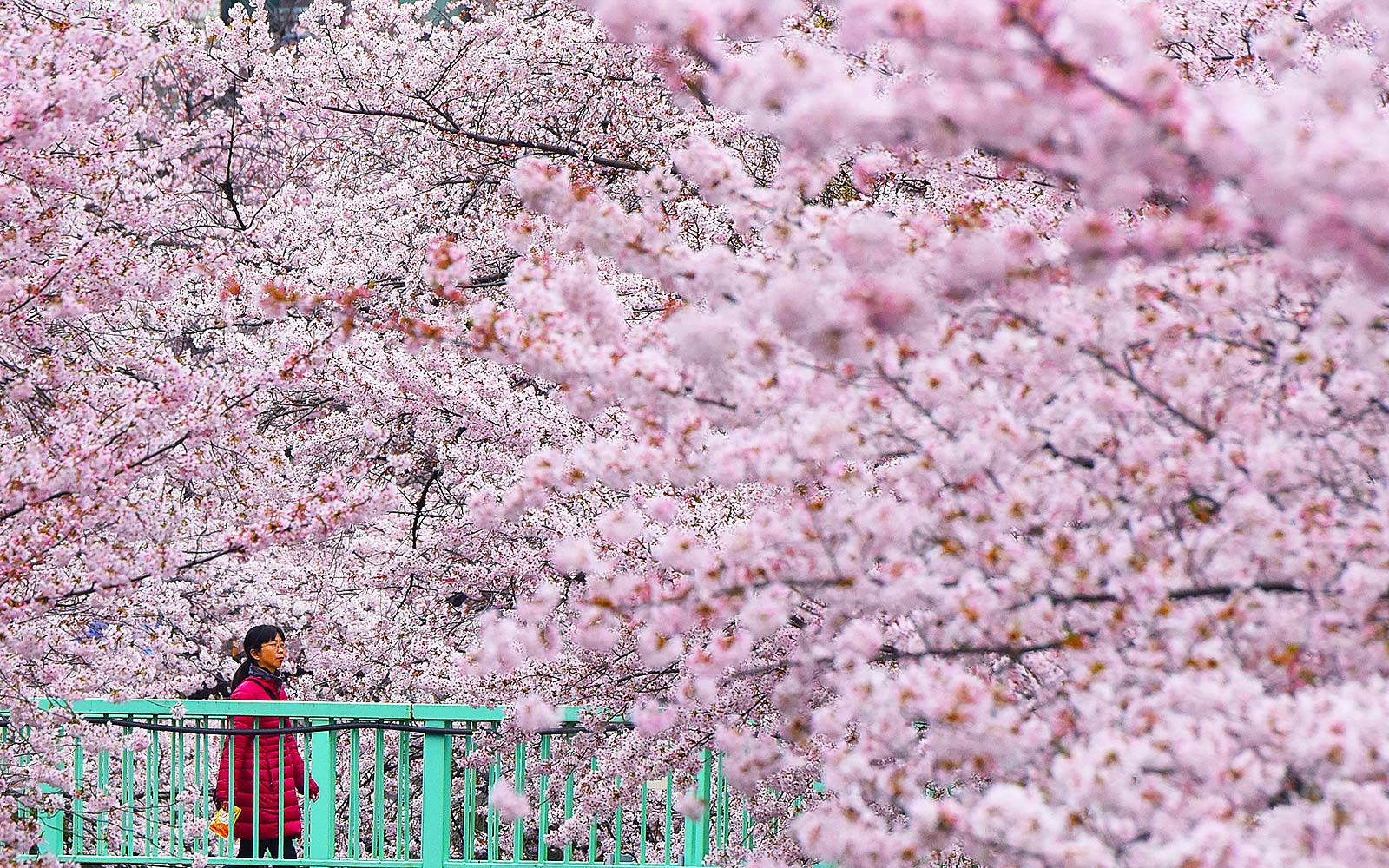 6 Places to See the Cherry Blossoms in Japan This Spring Minus the Crowds