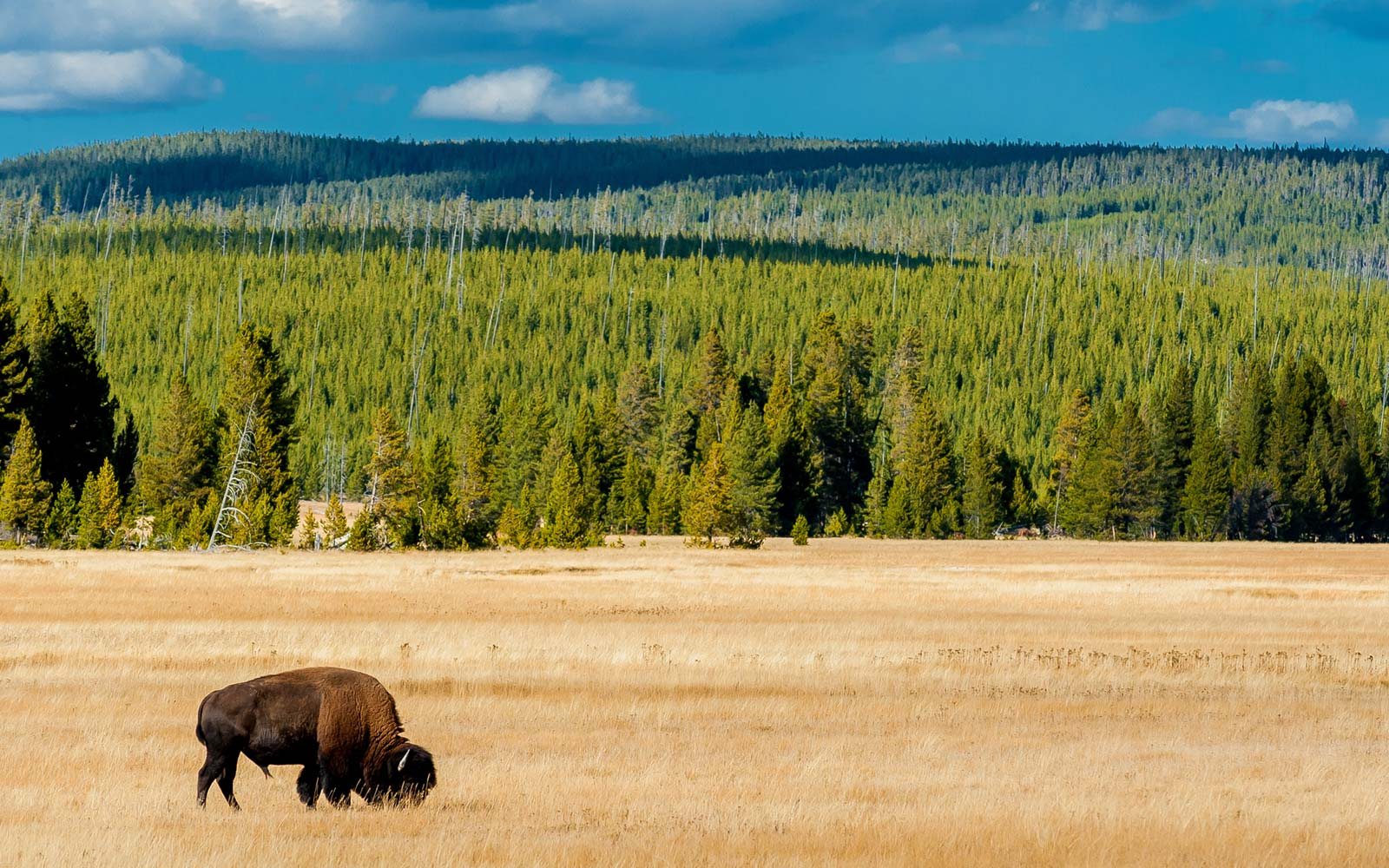 a guide to yellowstone national park | travel + leisure